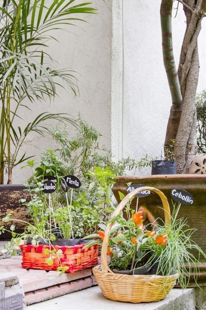 콘데사 지역의 아름다운 정원이 있는 멋진 주택(멕시코 멕시코시티)