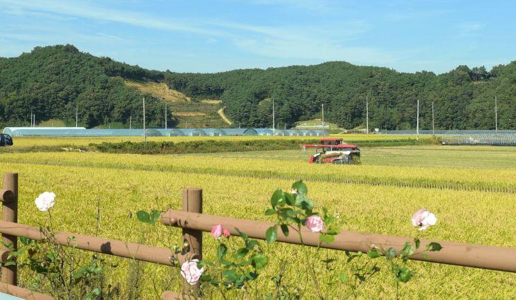 """쌀 수입관세율 513% 확정…정부 """"밥쌀 수입 가능성 낮다"""""""