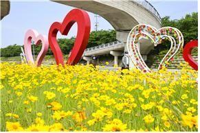 남원시 요천, 황금물결 이룬 금계국 꽃길