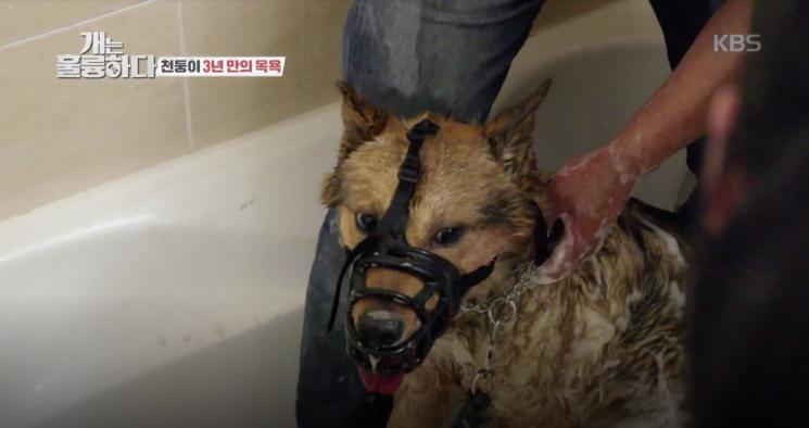 1일 방송된 KBS 2TV 예능 '개는 훌륭하다'에서는 동물훈련사 강형욱이 문제견 천둥이를 훈련하는 모습이 그려졌다./사진=KBS 2TV 방송 화면 캡쳐