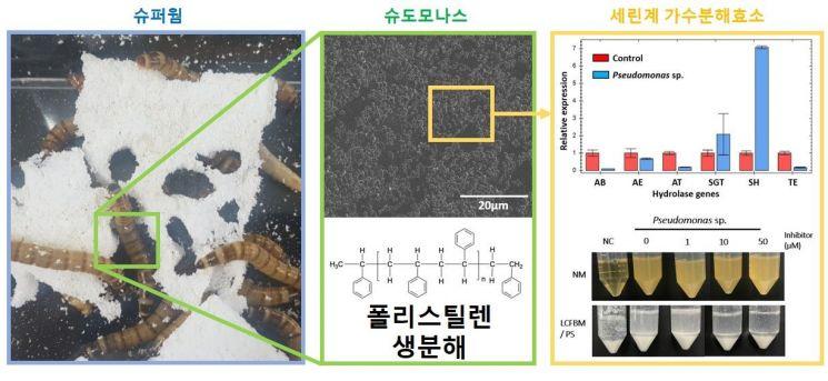 플라스틱을 섭취하는 슈퍼웜(왼쪽) 플라스틱 분해 박테리아(가운데) 플라스틱 분해 효소 후보(오른쪽)