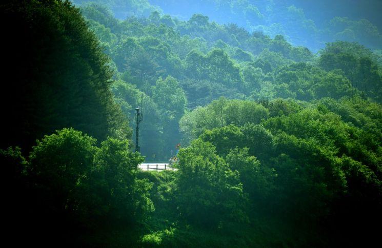 굽이굽이 이어지는 406번 지방도 이길 끝에 평화의댐과 비수구미 가는길이 나온다.