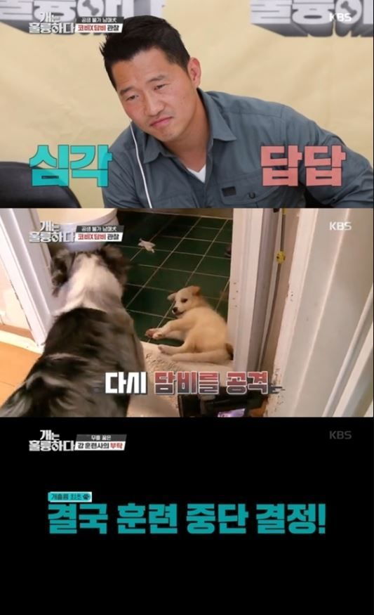 동물보호 상담센터가 지난 22일 KBS 2TV '개는 훌륭하다(개훌륭)'에 출연한 보더콜리 '코비'와 '담비' 견주에 대한 법적 처벌 가능성을 시사했다./사진=KBS 2TV '개는 훌륭하다' 방송 화면 캡처