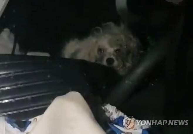 지난 23일 오전 0시34분께 부산 해운대 한 아파트 주차장에 있는 차 안에서 강아지 1마리가 방치돼 있다./사진=연합뉴스