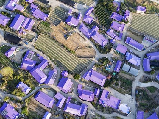 보라색으로 뒤덮인 신안군 반월·박지도 (사진=신안군 제공)