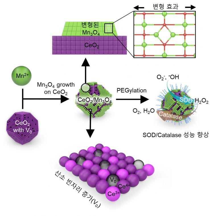 세륨-망간 산화물 헤테로 나노입자 합성 과정