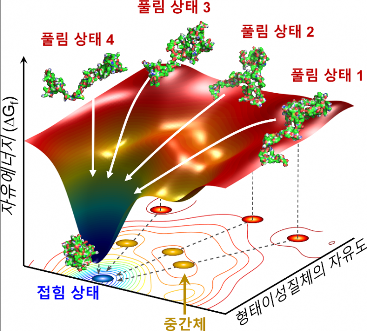 시간 분해 엑스선 산란법을 적용해 사이토크롬 단백질의 접힘 과정을 밝혀냈다. 이를 통해 이론적 모델로만 제시됐던 깔때기꼴 접힘 가설을 실험적으로 입증했다.