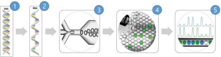 코로나19 바이러스 유전자 표준물질 제조과정