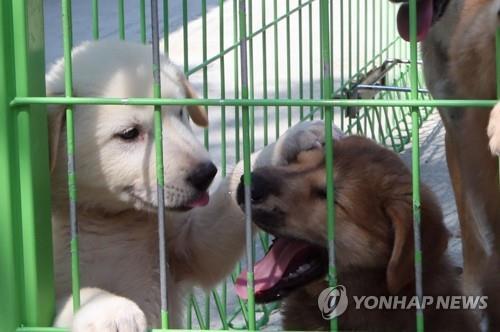 동물보호소의 유기견. 사진은 기사 중 특정 표현과 관계 없음. / 사진=연합뉴스