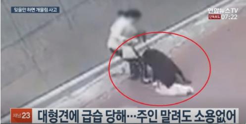 지난해 7월25일 맹견이 소형견인 스피츠를 습격해 죽이는 사건이 벌어졌다. / 사진=연합뉴스TV