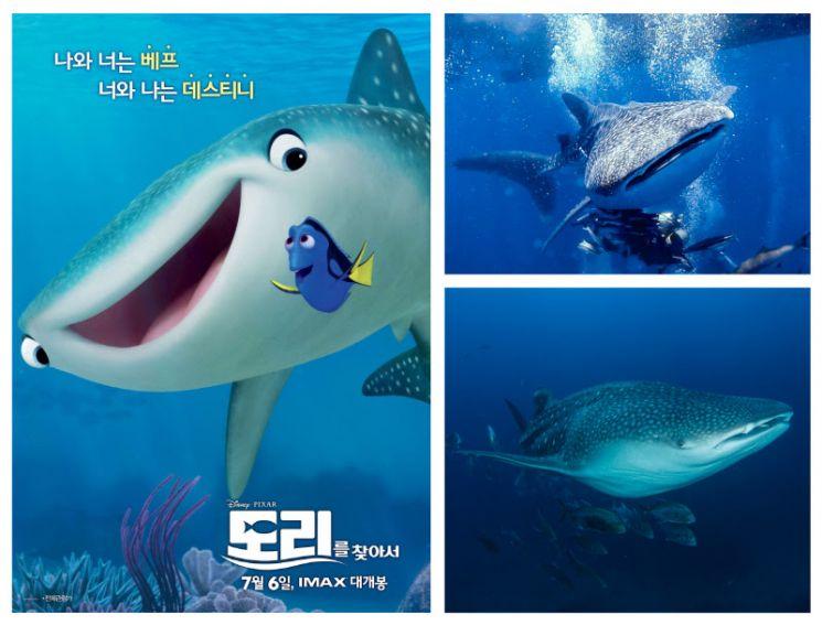 고래상어 이미지