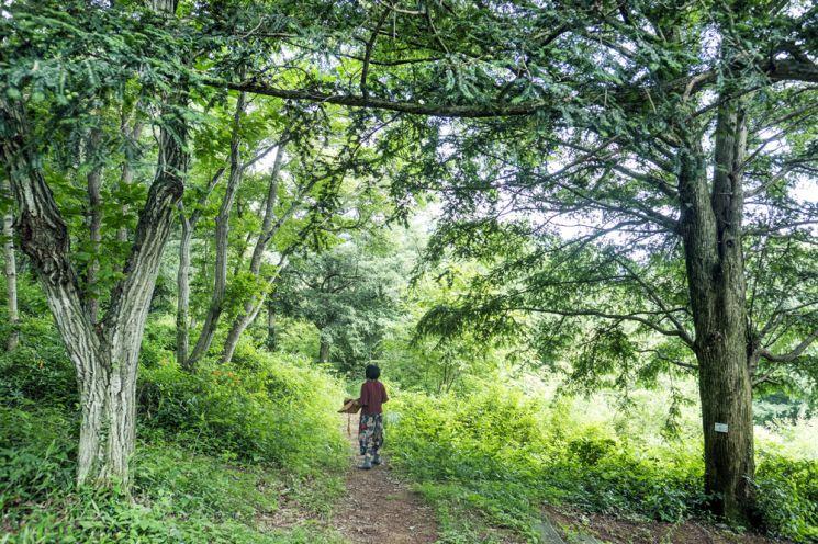 보림사 비자림숲-한국관광공사제공