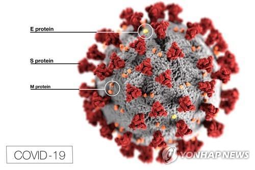 코로나 바이러스의 구조./사진=연합뉴스