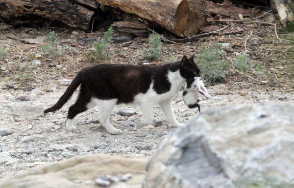 지난 5월 고양이 한 마리가 새끼를 입에 물고 이동하는 모습이 카메라에 포착됐다. 사진은 기사 중 특정표현과 무관함. 사진=연합뉴스