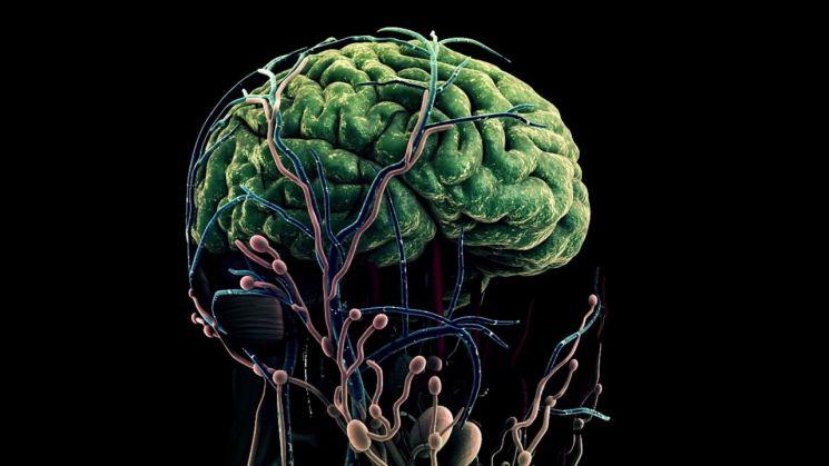 인간의 뇌를 형상화한 그래픽  [사진출처=삼성전자 뉴스룸]