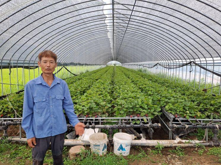 곡성군, 딸기 유기농 고설 베드묘 시범 생산 성공