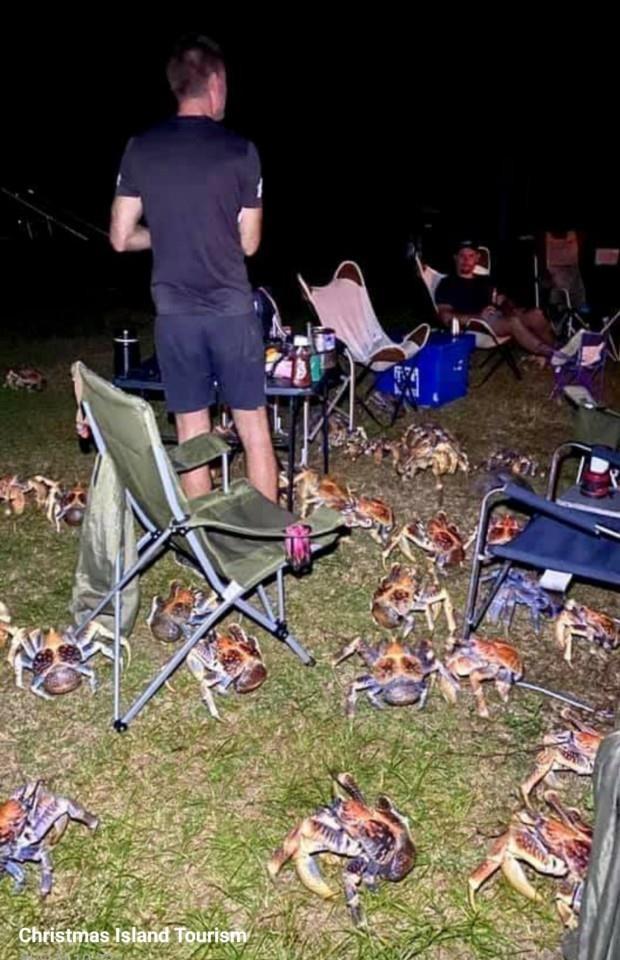 호주 크리스마스섬 해변가의 한 캠핑장에 나타난 게떼. 사진=크리스마스섬 페이스북.