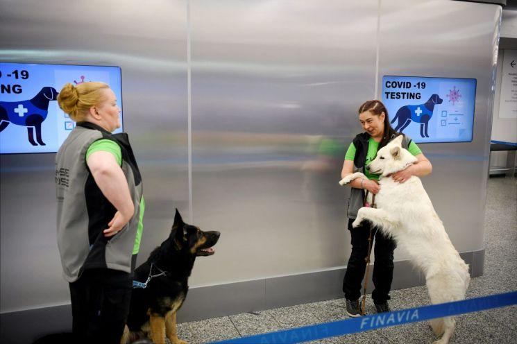 신종 코로나이러스감염증(코로나19) 탐지 훈련을 받은 개 발로(왼쪽)과 ET가 훈련사와 함께 헬싱키 공항에 나타났다. [이미지출처=로이터연합뉴스]