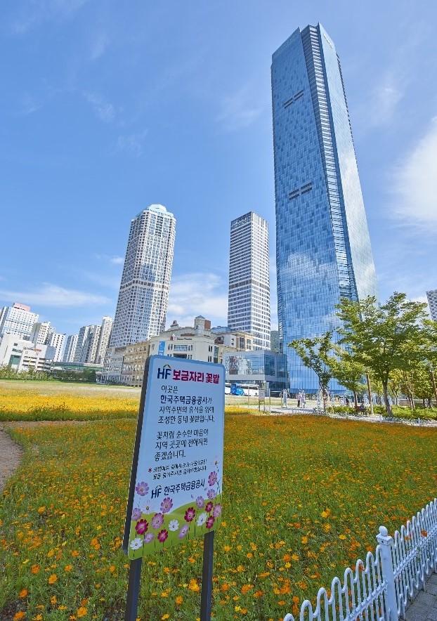 부산시 남구 문현금융단지에 한국주택금융공사가 조성한 'HF 보금자리 꽃밭'. 코스모스가 만개해 있다.