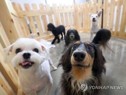반려동물 호텔에서 잇따라 개가 죽거나 다치는 사고가 발생하는 가운데, 관리자에 대한 자격요건을 강화해야 한다는 목소리가 커지고 있다. 사진=연합뉴스