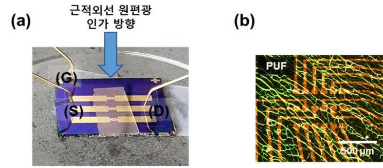 연구진이 개발한 카이랄 액정 네트워크 필름이 결합된 근적외선 원편광 감응 광트랜지스터 소자와 물리적 복제 방지 기능      (PUF) 어레이의 POM 사진