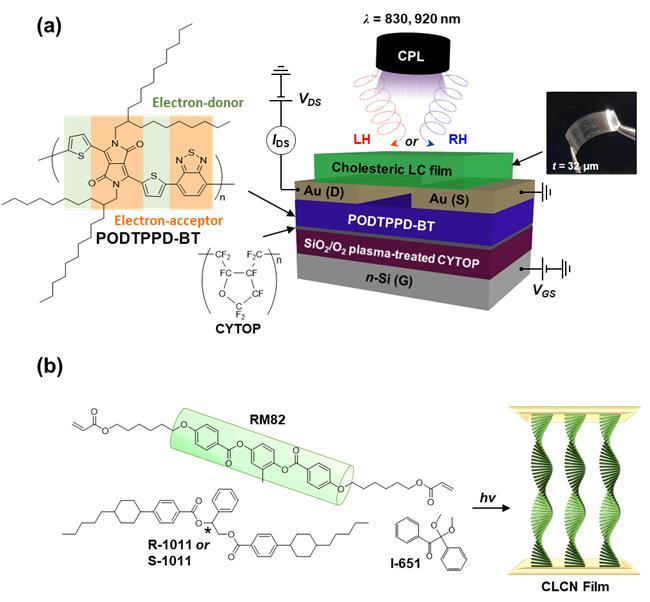 근적외선 원편광 감응 광트랜지스터 소자의 구조와 모식도.
