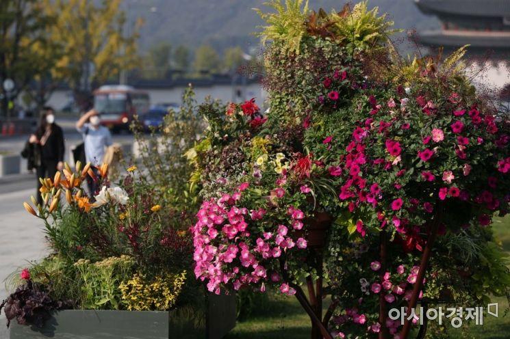 일교차가 큰 가을 날씨가 이어진 20일 서울 종로구 광화문광장에 가을 꽃이 식재돼 있다.