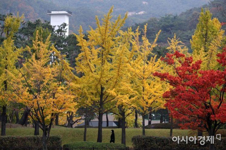 [포토]울긋불긋 가을 단풍