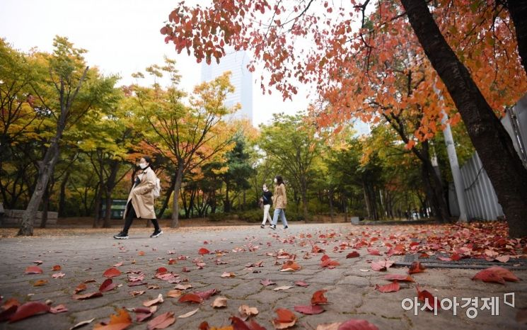 [포토] '단풍과 낙엽'