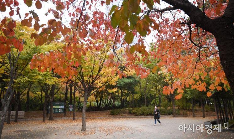 [포토] 가을빛으로 물드는 여의도공원