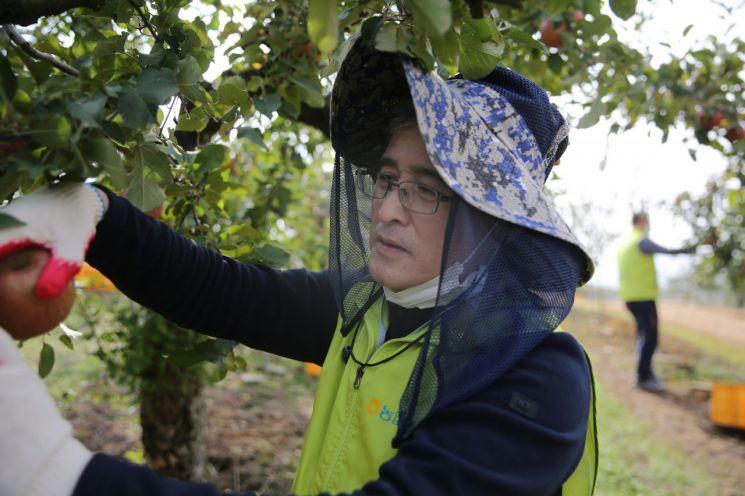 홍재은 NH농협생명 대표이사가 영농철을 맞아 사과수확 일손돕기를 실시하고 있다.