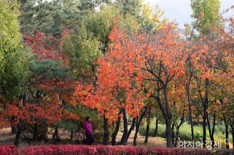[포토]알록달록 가을