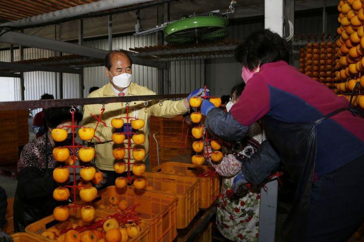 지난 23일 곶감재배 농가를 방문한 강영석 시장이 건조작업을 돕고 있는 모습.