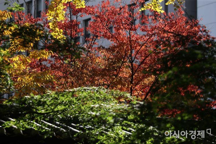 [포토]화려한 가을 색