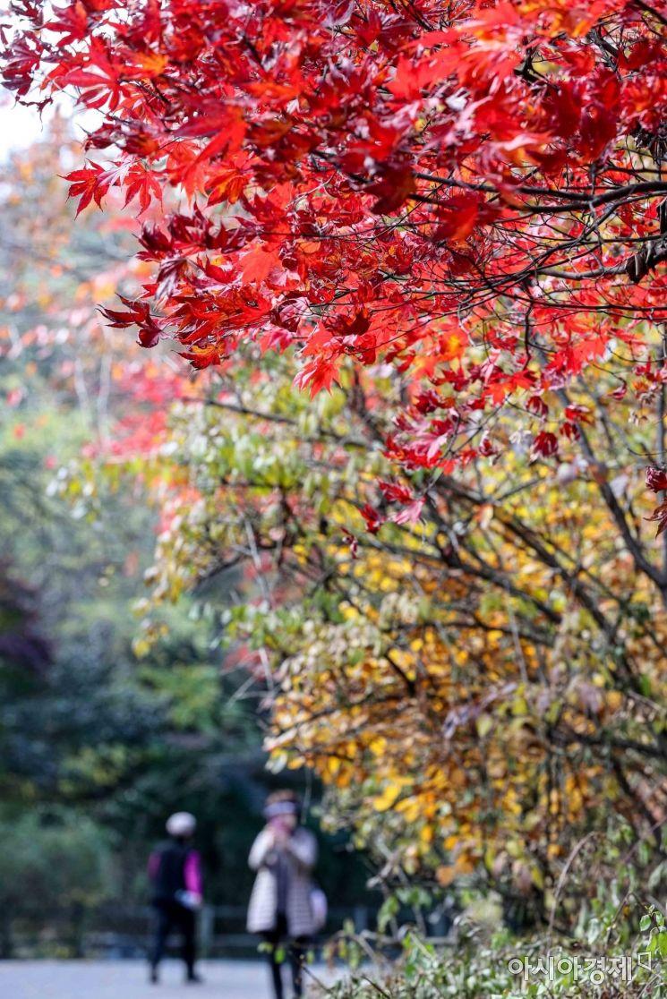 [포토]붉게 물든 남산 단풍