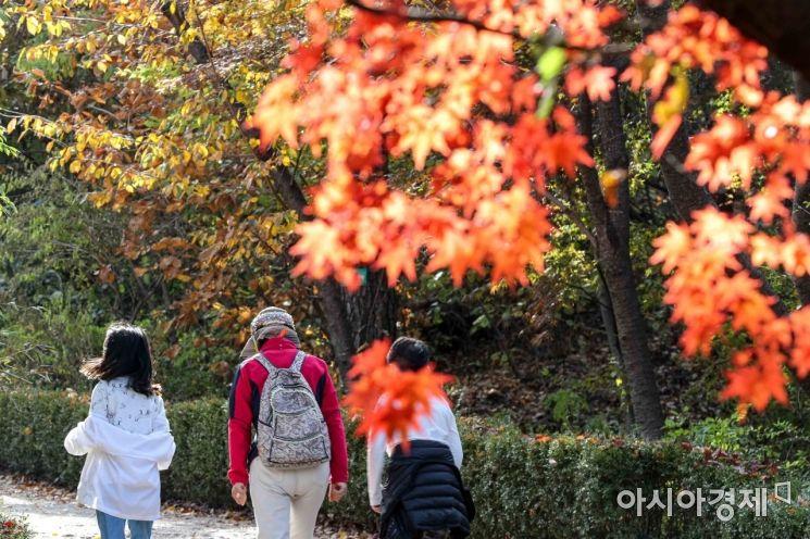 완연한 가을 날씨가 이어지고 있는 29일 서울 남산 산책로에 단풍이 물들고 있다.