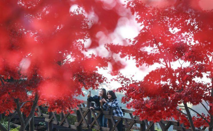 함양 오도재 깊어가는 가을 단풍 (사진=함양군)