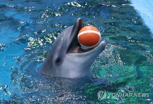 한 수족관에서 돌고래가 공을 물고 있다. 사진은 기사 중 특정표현과 무관함. 사진=연합뉴스