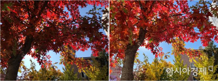 역광에서 단풍 나무를 촬영했을 때 아이폰12(오른쪽)의 사진이 붉은 잎 색상을 잘 표현해냈다. 아이폰X로 촬영한 단풍잎은 더 어둡게 나왔다.