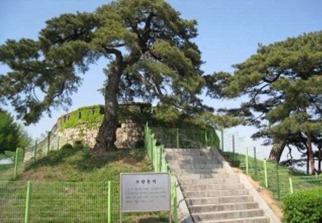 인천광역시 강화군 길상면 초지진 유적지에 서있는 소나무의 모습. 운요호 사건 당시 포격 상흔이 남아있다고 알려져있다.[이미지출처= 강화군 홈페이지]