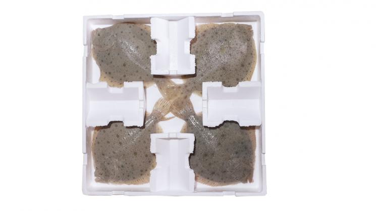 더피쉬의 '터봇(철광어) 인공동면기술'을 통해 물 없이 박스에 포장한  철광어.
