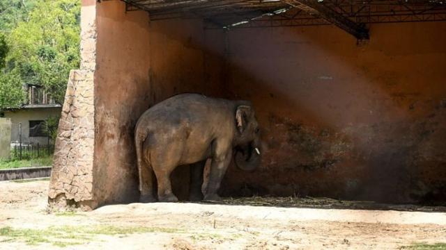 이스라마바드의 동물원 창고 덮개 아래 서 있는 카반의 모습. [이미지출처 = BBC제공]