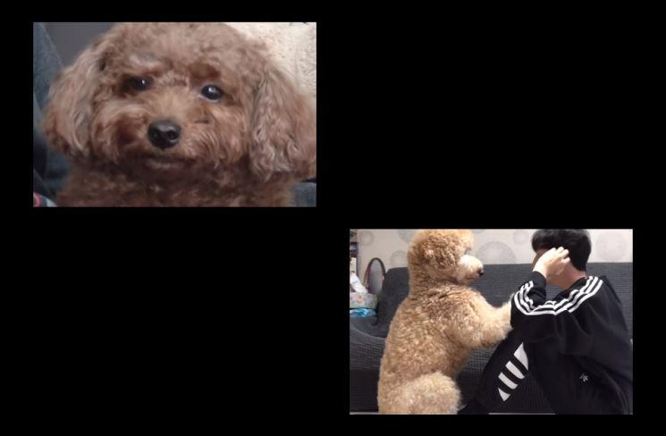 사진=속삭이는 몽자, 천재견 사월 유튜브 화면