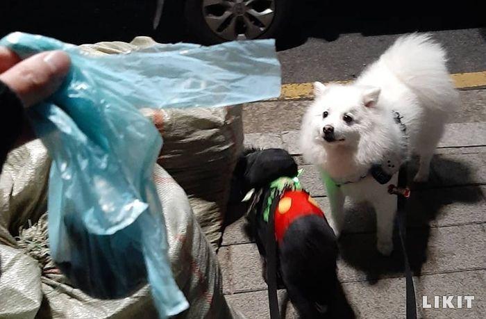 배변봉투를 들고 있는 '같이걸을개' 챌린저. 사진=pie_chui 인스타그램