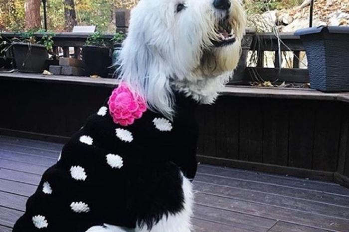 커플룩으로 입고 싶은 스웨터. 사진=칠리독 스웨터 인스타그램
