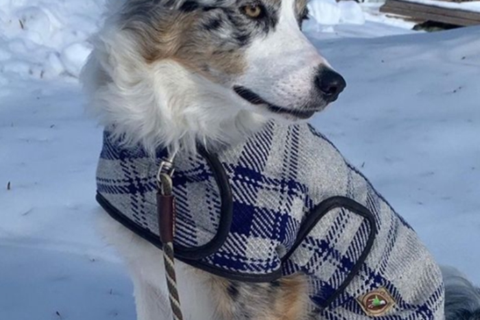 예쁘고 따뜻한 강아지 코트. 사진=칠리독 스웨터 인스타그램