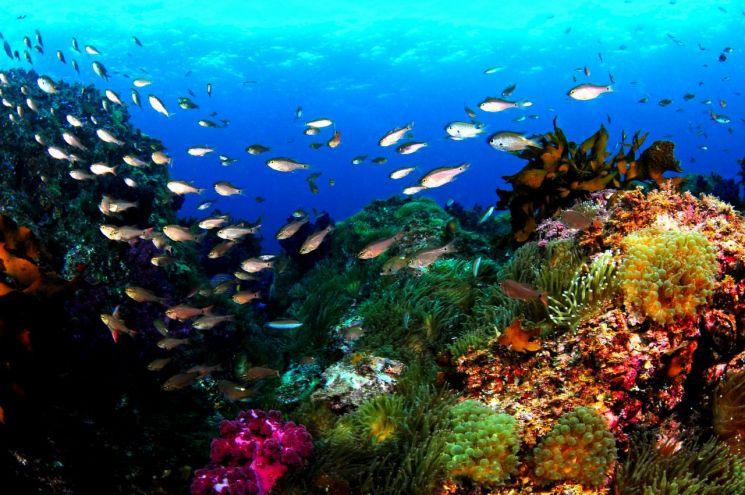 서귀포 바다 산호초, 사진=제주도 생물권보전지역