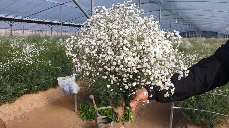 여수시, 지역 화훼농가 돕기 꽃 사주기 운동 전개
