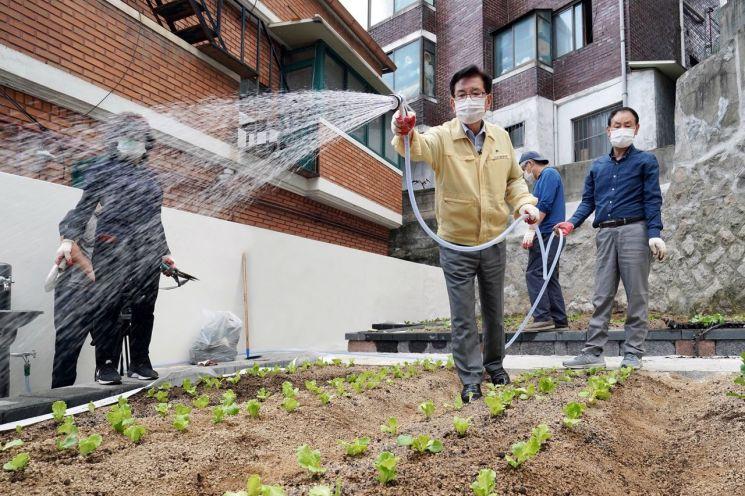 유덕열 동대문구청장이 답십리동 빈집 터에 조성된 도시 텃밭 1호에 물을 주고 있다.
