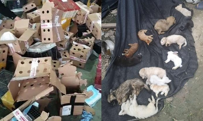 중국서 택배 상자에 담겼다가 숨진 반려동물들. 사진=글로벌타임스 캡처.